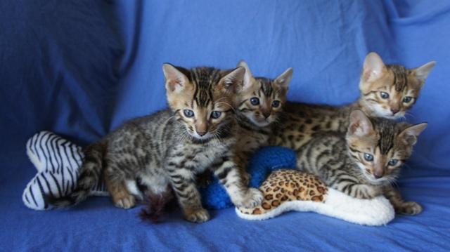 kawaii cat names